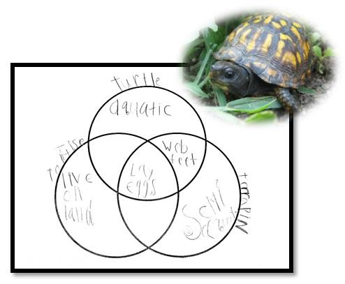 Gr1_Turtles