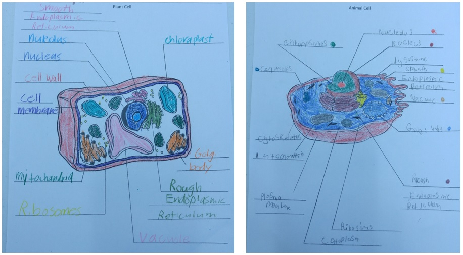 Gr5_Cell Diagrams